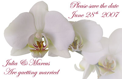 Wedding save the date Orchid white